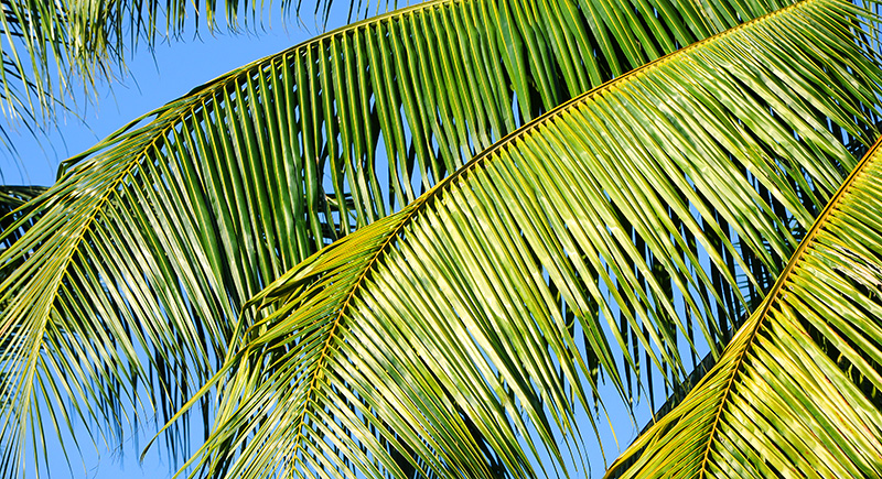 Huile de palme durable ?